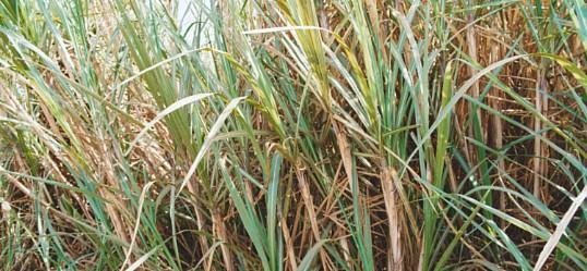 Productos perforados para la industria azucarera